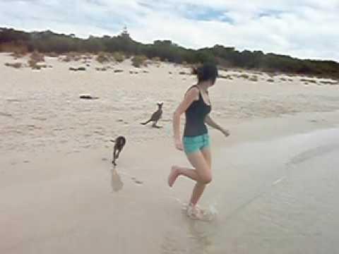 Baby Känguruhs am Strand