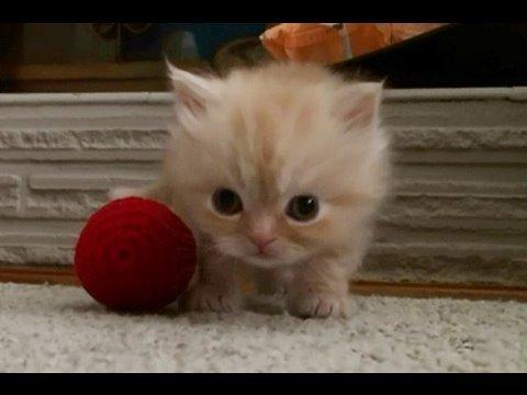 Baby Kätzchen beim Spielen