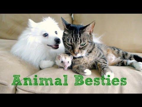 Best Buddies: Hund, Katze und Igel