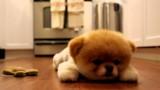 Boo ist müde…