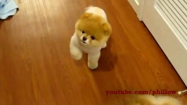 Der süßeste Hund der Welt: Boo!