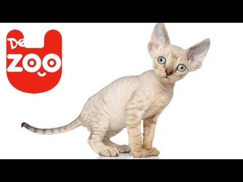 Die 5 komischsten Katzen