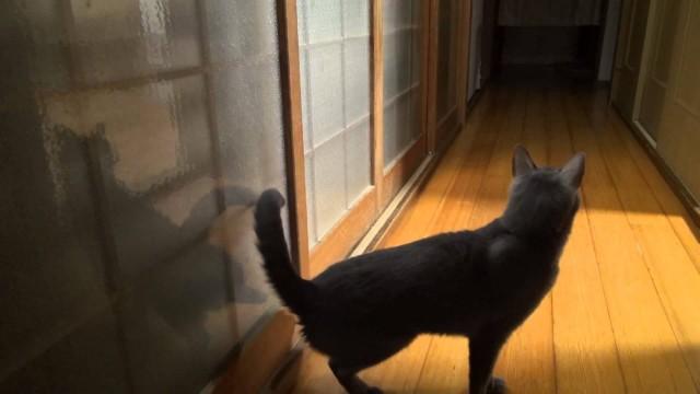 Diese Katze klopft vorher an