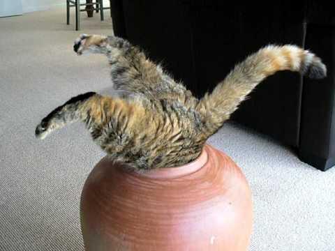 Etwas dickere Katze will in Blumentopf