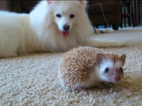 Hund trifft Igel