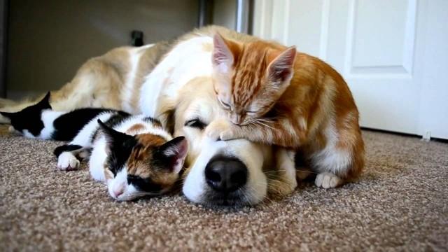 Hunde und Katzen können Freunde sein!