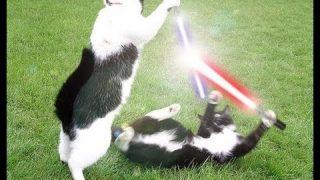 Jedi Katzen
