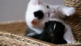 Kätzchen und Stinktier sind beste Freunde?