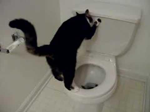 Katze geht aufs WC