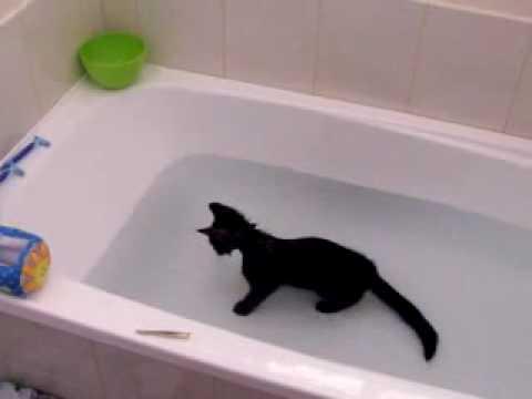 Katze liebt es zu baden