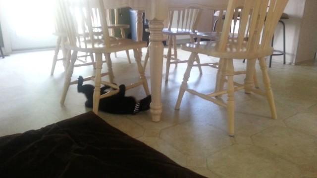 Katze macht Ninja Ausbildung