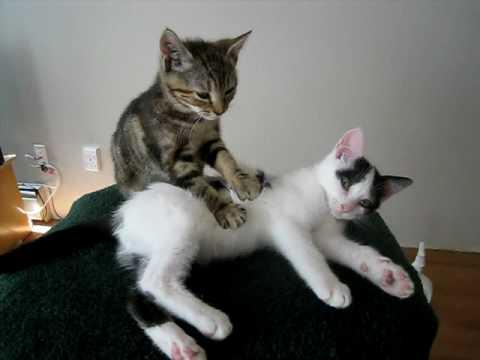 Katze massiert Katze