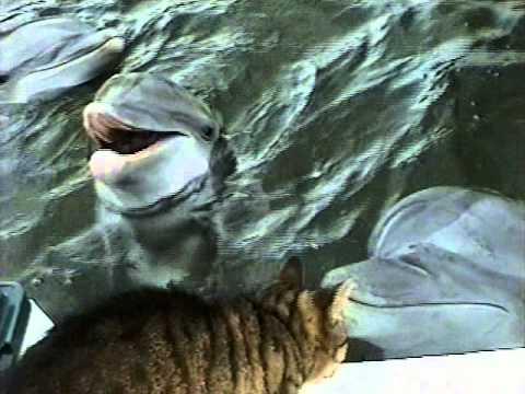 Katze trifft auf Delphine