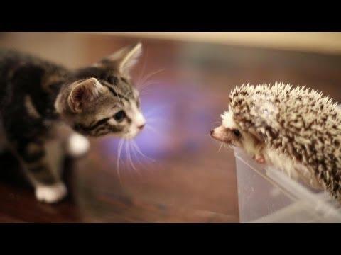 Katze trifft Igel