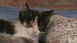 Katze weckt Kurzhaar Hundebabys