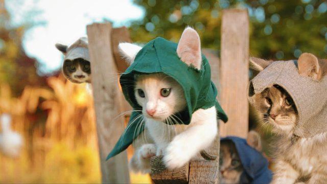 Katzen als Attentäter (Assassin's Kittens)