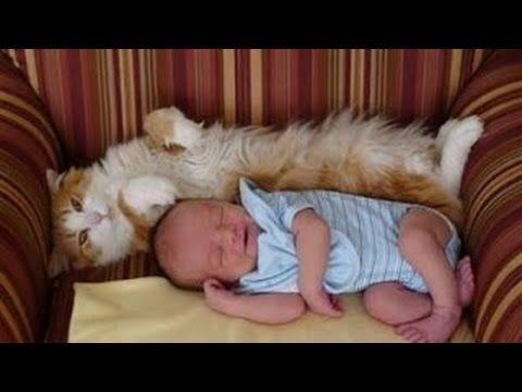 Katzen treffen auf Neugeborene