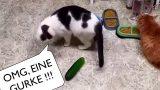 Katzen vs. Gurken