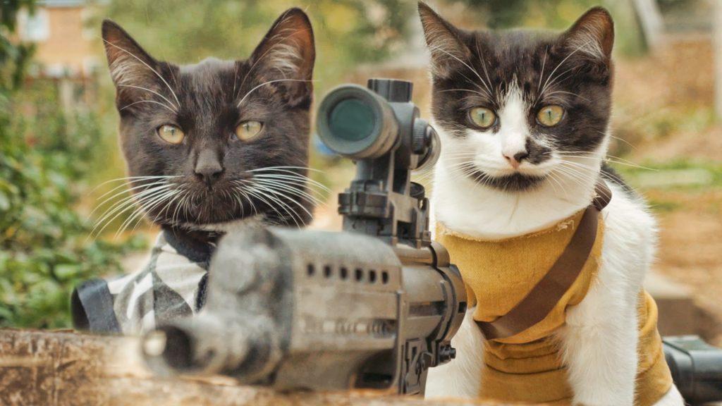 Tiervideos Katzen