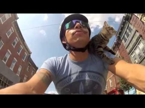 Katzenhobby: Mit Herrchen radfahren!