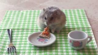 Kleiner Hamster isst kleine Pizza