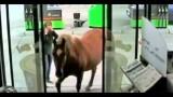 Kommt ein Pferd in die Tanke
