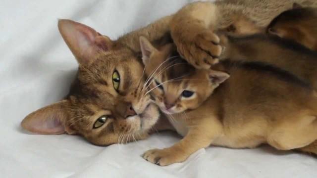 Mutter Katze mit Ihren Babys