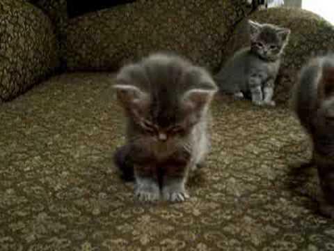 Niedliches Kätzchen ist soooo müde