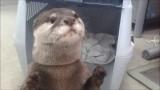 Otter holt Dein Getränk vom Automaten