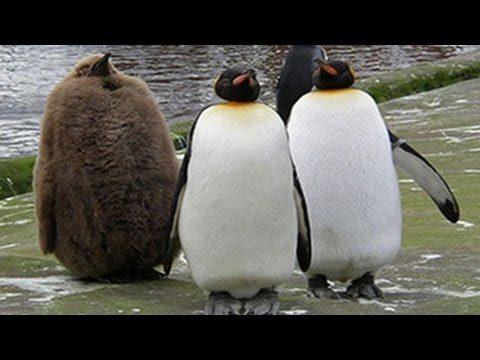 Pinguine sind lustig