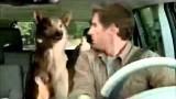 Tiere fahren im Auto mit und singen