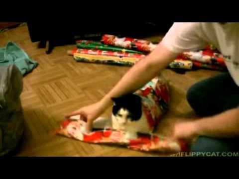 Wie man eine Katze richtig als Geschenk verpackt